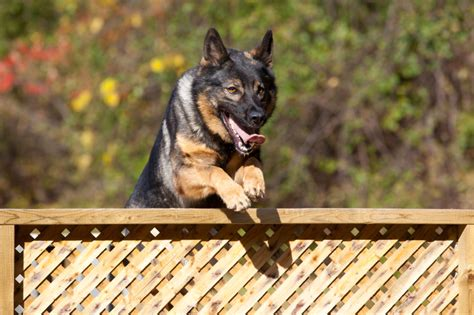 jumping fence how to stop a from jumping the fence suburban k9