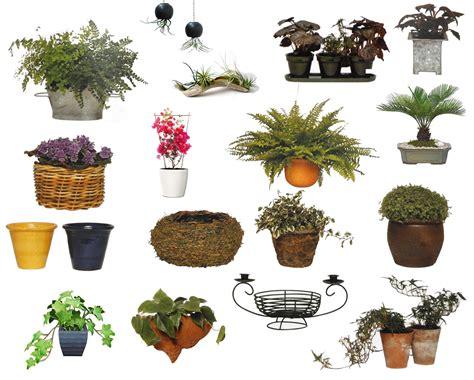 Salad Flower 3 Liter ornamental pots plants flowers plant vs pot size garden