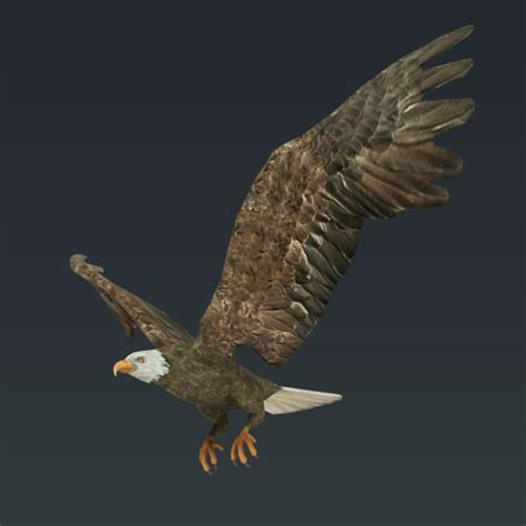 Kaos 3d Eagle Fly 3d rigged flying eagle