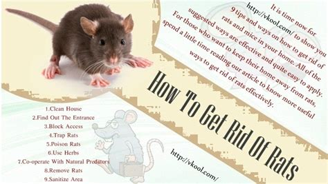 How To Get Rid Of Rats In The Backyard by 9 Tips And Ways How To Get Rid Of Rats And Mice In Your Home