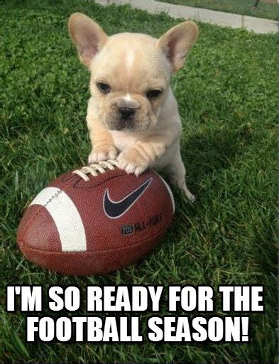 football cat meme 28 images flag football meme