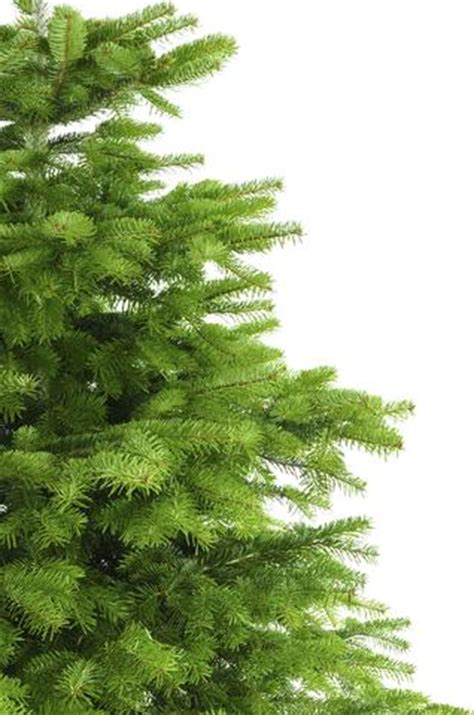 tree delivery uk real tree delivery uk order
