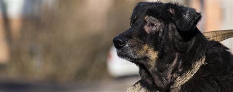 dogs  psoriasis
