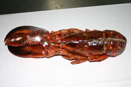 wholesale lobster prices