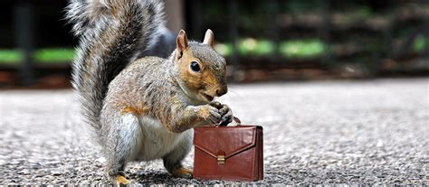 what can hr learn from problem solving squirrels hr