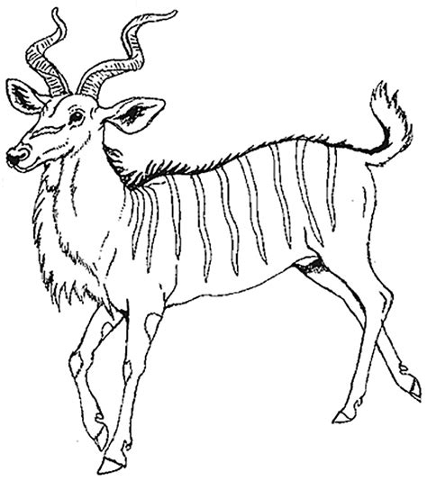 antelope 34 animals printable coloring pages