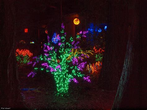 bellevue washington botanical garden christmas lights