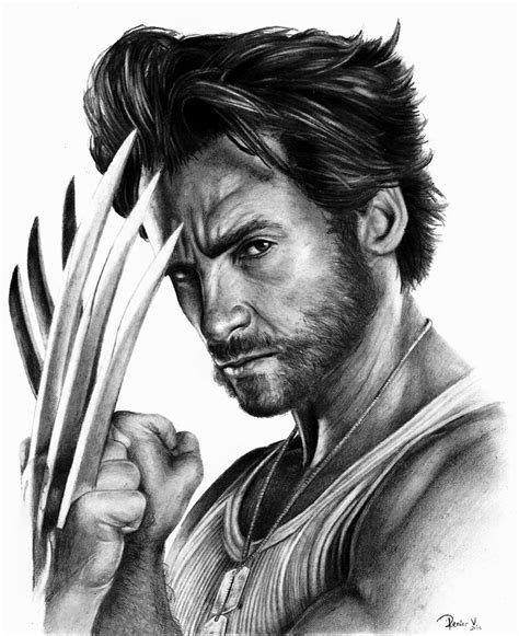 Wolverine Drawing