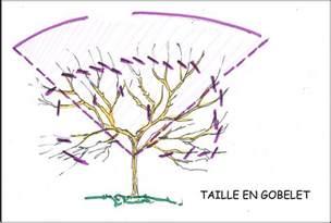 comment et quand tailler un cerisier ou arbre fruitier