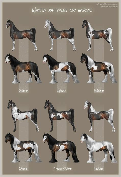 strumming pattern for white horse 25 best ideas about american paint horse on pinterest