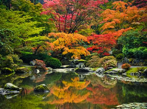 japanischer garten seattle maple viewing festival at seattle japanese garden oct 15