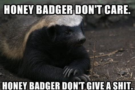 Honey Badger Don T Care Meme - 14 amazing things that animals can do you have to know