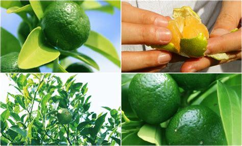 citrus moca 琉白シークワーサーブライトニングシリーズで肌のくすみやゴワつきケア