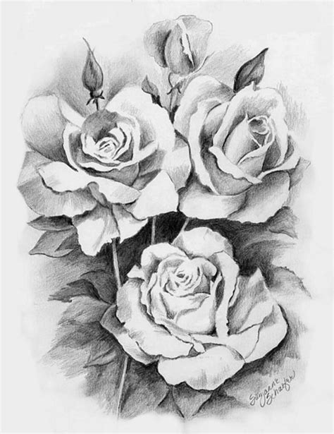 rose drawing 14 8614 the wondrous pics
