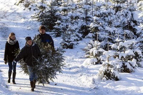 pick the perfect christmas tree reliable remodeler