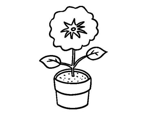 disegni da colorare fiori di primavera disegno di un fiore di primavera da colorare acolore