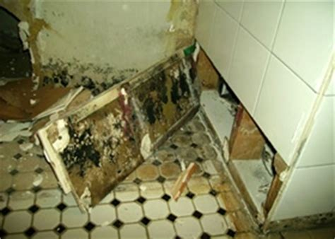 is mold in the bathroom dangerous a look at toxic black mold in new jersey mastertechmold