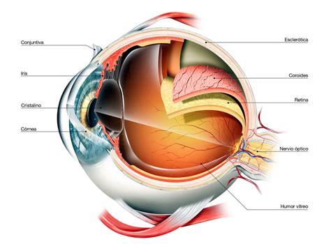 imagenes de ojos por dentro partes y funcionamiento del ojo cl 237 nica dr soler innova