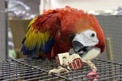 2009 atlanta s exotic bird fair photo gallery