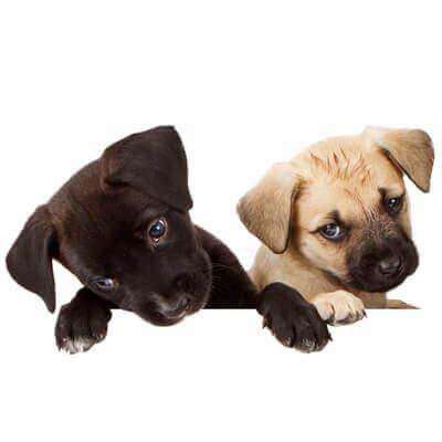 dhpp puppy vaccine puppy schedule culpeper animal hospital culpeper va