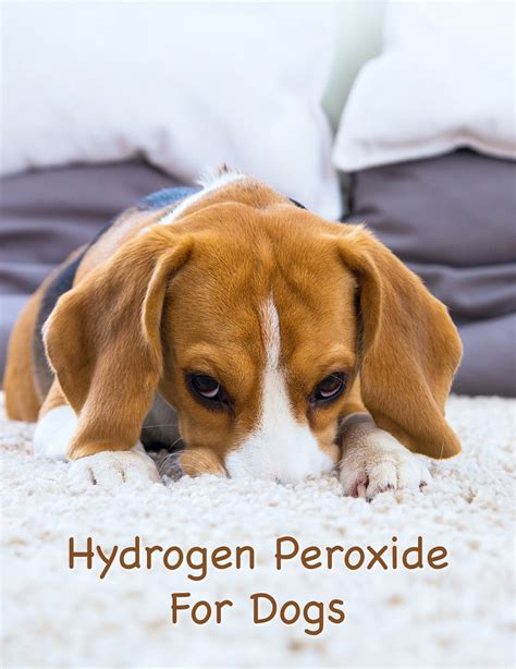 hydrogen peroxide on dogs hydrogen peroxide for dogs what can i use it for safely