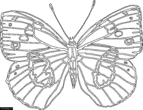 Big Butterfly Coloring Page For Kids Printable Big Printable Coloring Pages
