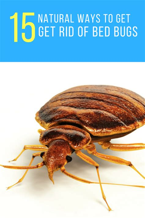 how to get rid of bed bugs forever 15 ways
