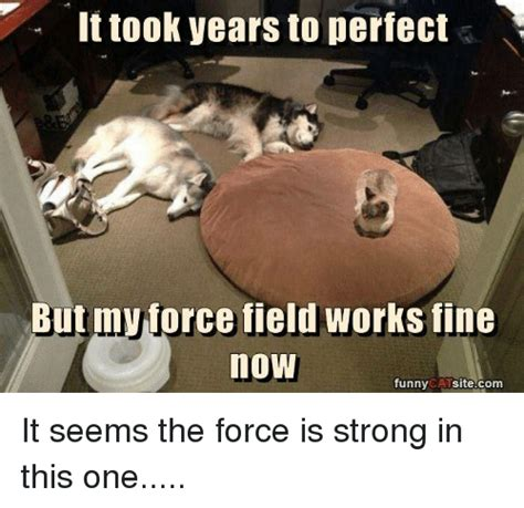 The Force Is Strong With This One Meme - 25 best memes about funny cat funny cat memes