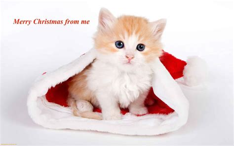 images of merry christmas kittens cats and dogs blog december 2012