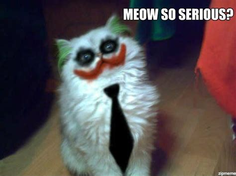 Meow Meme - meow so serious weknowmemes