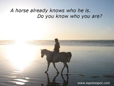 printable horse quotes horse quotes success quotesgram