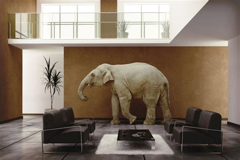 elephant in the room meaning we need to talk 26 awkward questions to ask news organizations about the move to digital
