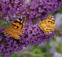 jardin des papillons conseils sur les plantes 224 choisir