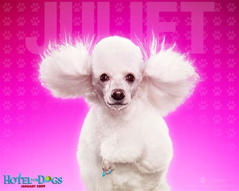 wallpaper pink dog great effect pink dog wallpapers backgrounds dogs