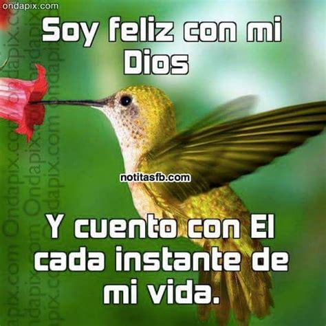imagenes animadas de aves feliz viernes fotos bonitas de imagenes de aves con mensajes cristianos imagenes de