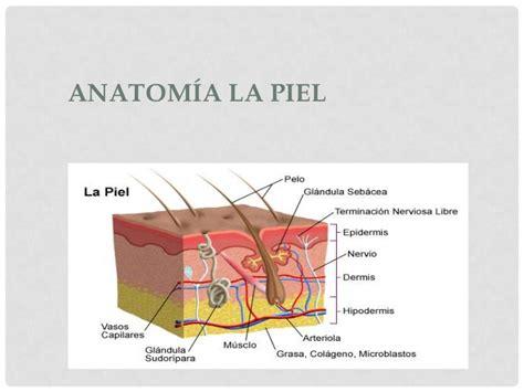 libro la piel de la piel anatomia y fisiologia