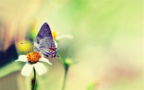 wallpaper flower and butterfly 30 colorful butterfly wallpapers free to download
