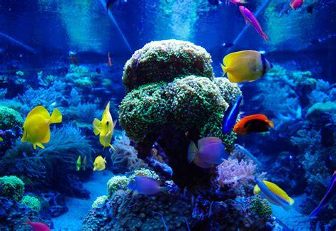 aquarium design glasgow fish tank maintenance service cost newcastle 2017 fish