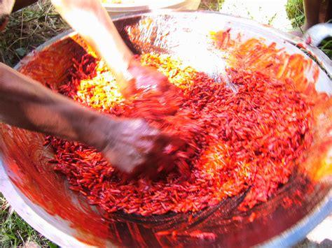 Buah Pepaya Merah buah merah and papuan 5 pandanus lam