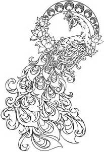 peacock coloring page 17 best images about peacock on printable