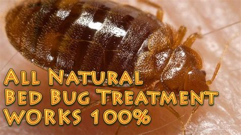all natural bed bug treatment works 100 no harsh
