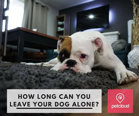 how long can you leave your senegalese in how long can you leave your dog alone blog petcloud