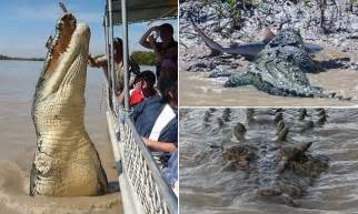 Brutus the giant croc who was pictured eating a bull shark is a star
