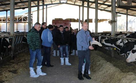 alimentazione vacca da latte economia modica l alimentazione della vacca da latte