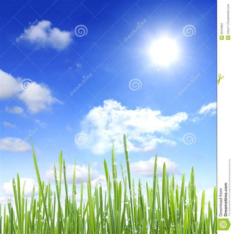Sky Sun And Grass With Water Drops Stock Image Image: 20134821