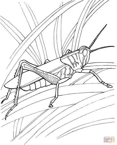 locust 4 coloring page free printable coloring pages