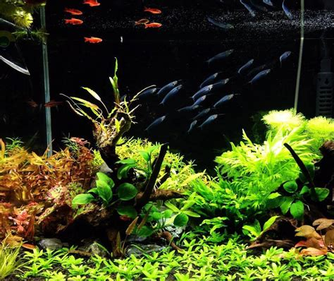 Aquascaping Inspiration by Aquascaping Inspiration Part 2 Exoaquaristic