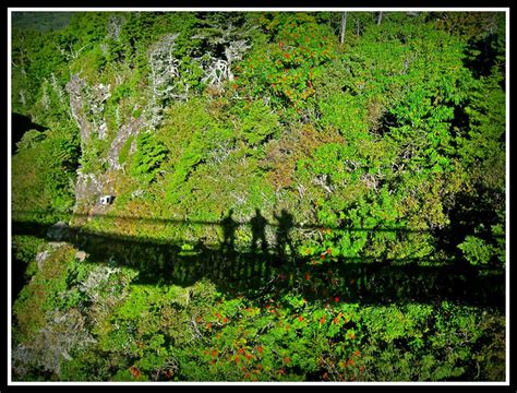 mile high swinging bridge at grandfather mountain الحياة البريه في جبال كارولينا