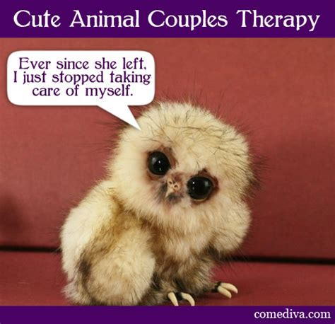 Cute Animal Memes - funny i love you animal meme dog breeds picture