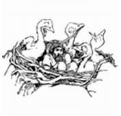 Birds Nest Clipart  I2Clipart Royalty Free Public
